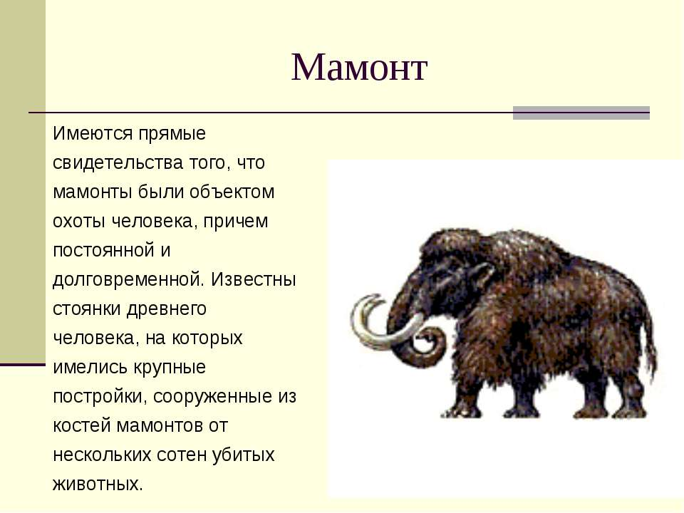 Мамонт Имеются прямые свидетельства того, что мамонты были объектом охоты чел...