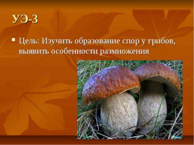 УЭ-3 Цель: Изучить образование спор у грибов, выявить особенности размножения