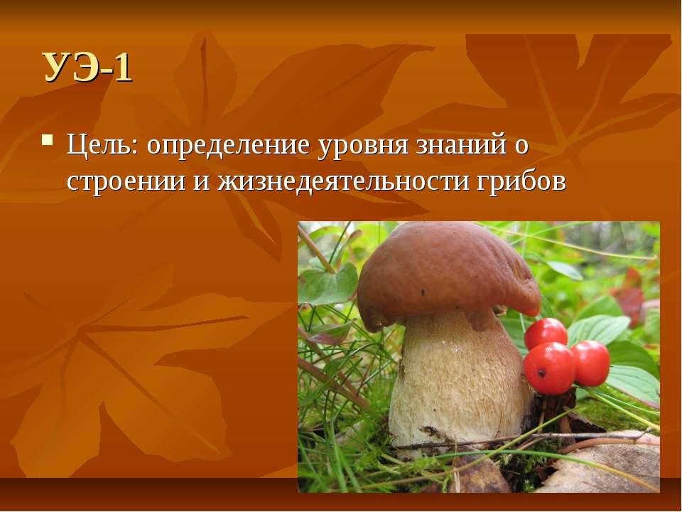 УЭ-1 Цель: определение уровня знаний о строении и жизнедеятельности грибов