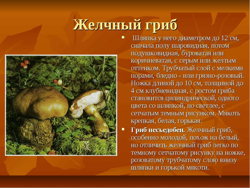 Желчный гриб Шляпка у него диаметром до 12 см, сначала полу шаровидная, пото...