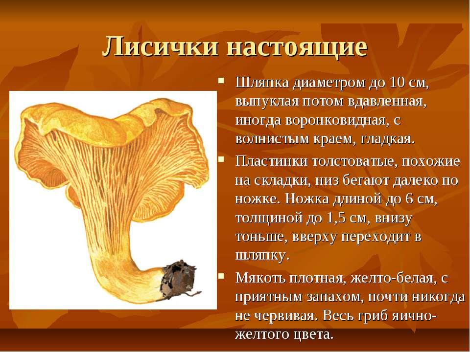 Лисички настоящие Шляпка диаметром до 10 см, выпуклая потом вдавленная, иногд...