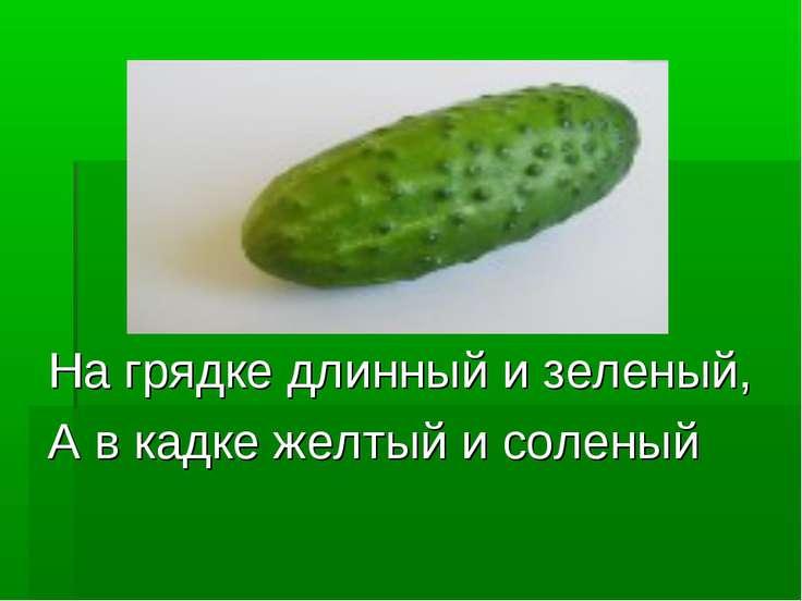 На грядке длинный и зеленый, А в кадке желтый и соленый