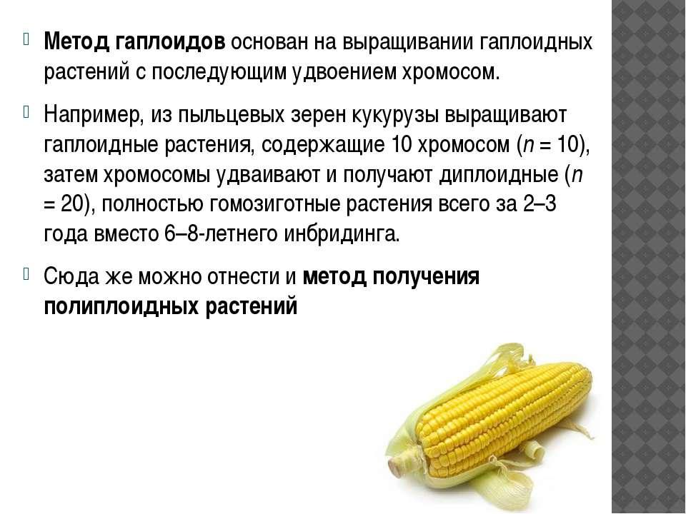 Метод гаплоидов основан на выращивании гаплоидных растений с последующим удво...