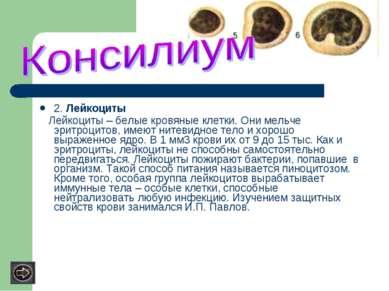 2. Лейкоциты Лейкоциты – белые кровяные клетки. Они мельче эритроцитов, имеют...