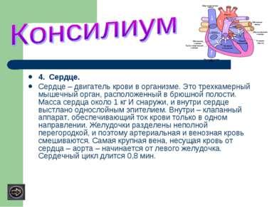 4. Сердце. Сердце – двигатель крови в организме. Это трехкамерный мышечный ор...