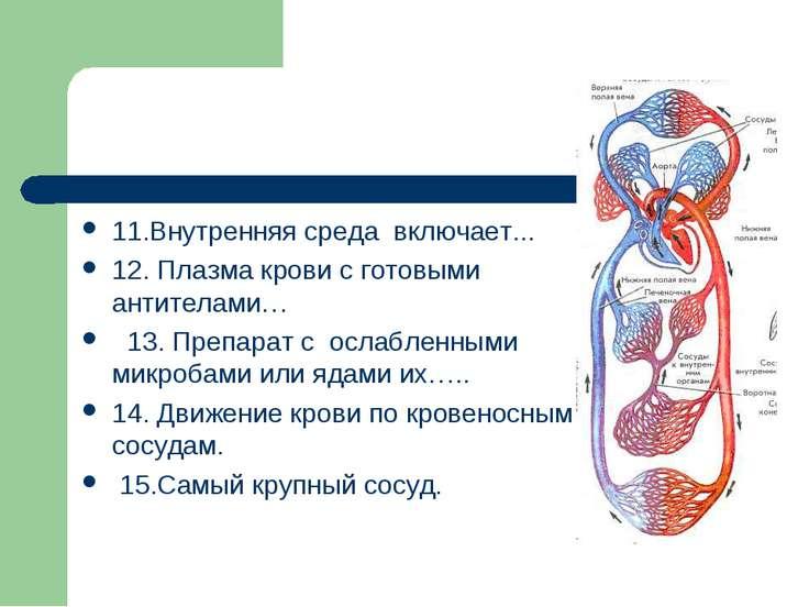 11.Внутренняя среда включает... 12. Плазма крови с готовыми антителами… 13. П...