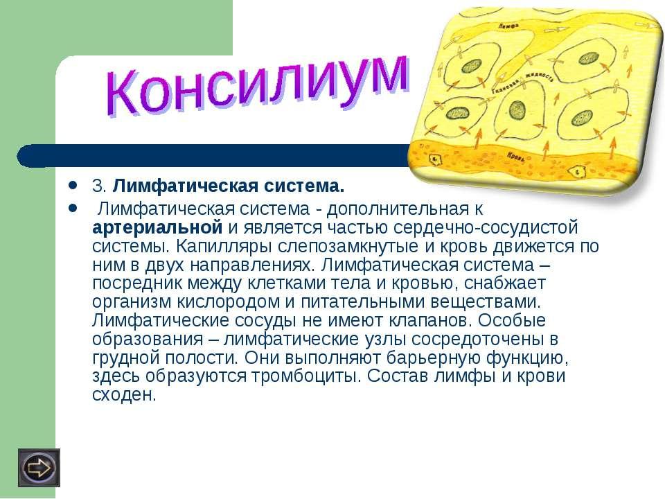3. Лимфатическая система. Лимфатическая система - дополнительная к артериальн...
