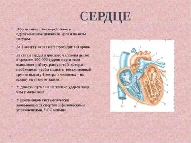 СЕРДЦЕ Обеспечивает бесперебойное и одновременное движение крови по всем сосу...