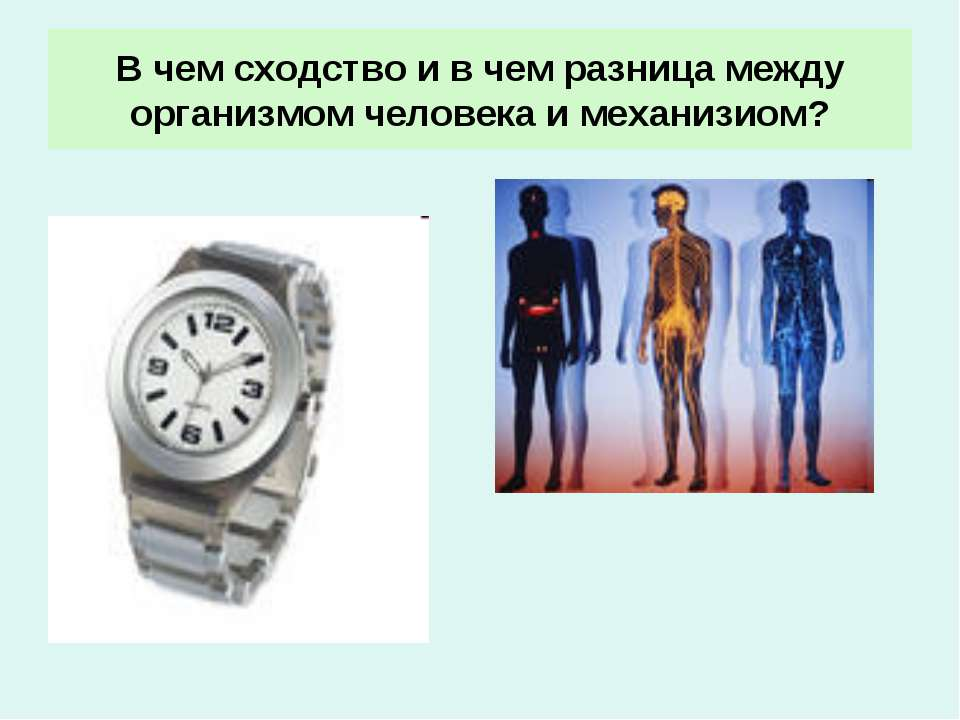 В чем сходство и в чем разница между организмом человека и механизиом?