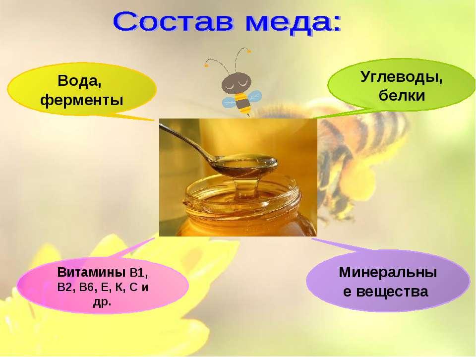 Витамины В1, В2, В6, Е, К, С и др. Углеводы, белки Минеральные вещества Вода,...