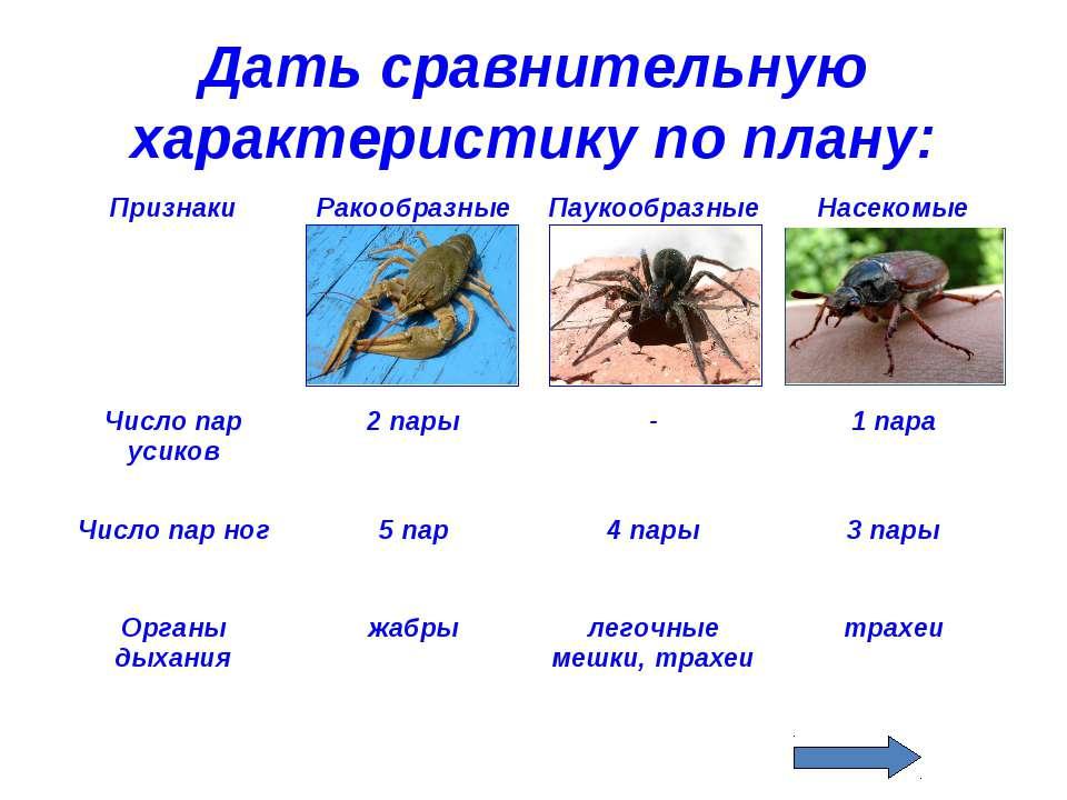 Дать сравнительную характеристику по плану: Признаки Ракообразные Паукообразн...