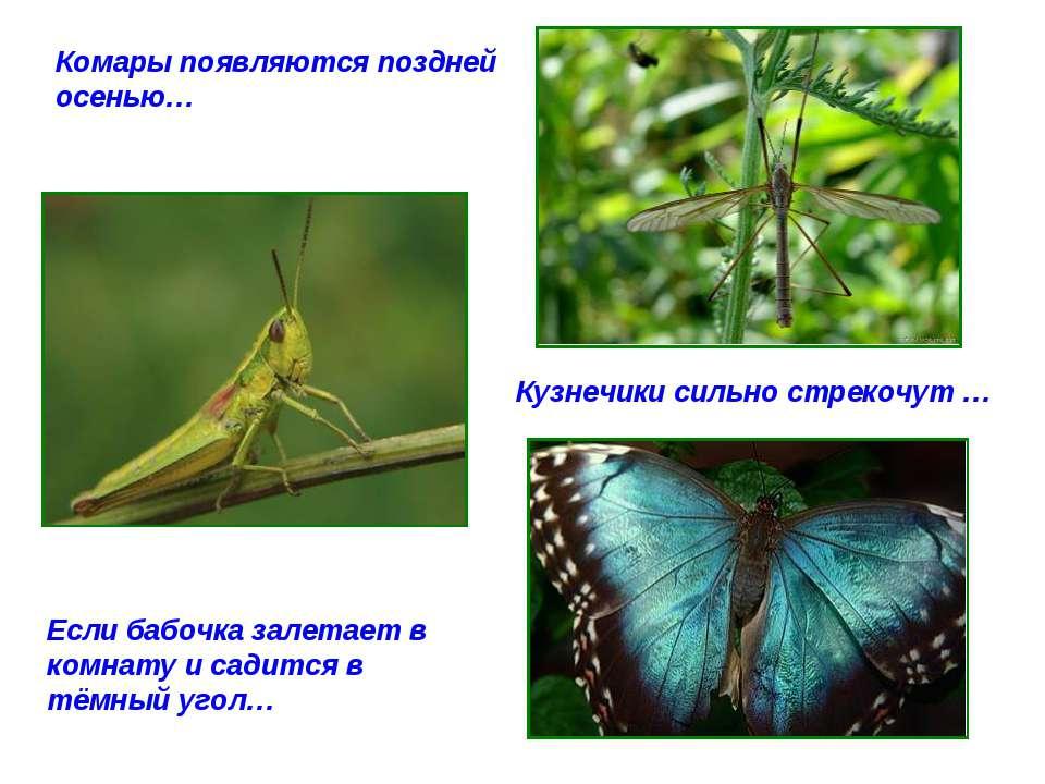 Комары появляются поздней осенью… Кузнечики сильно стрекочут … Если бабочка з...