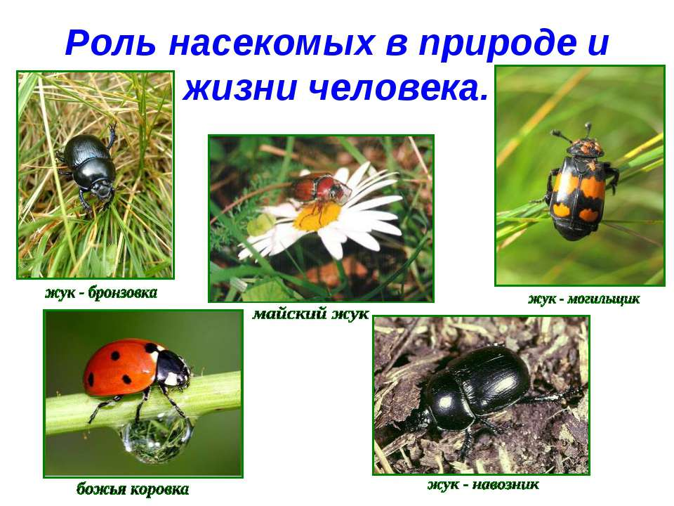 Роль насекомых в природе и жизни человека.