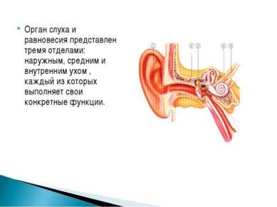 Орган слуха и равновесия представлен тремя отделами: наружным, средним и внут...