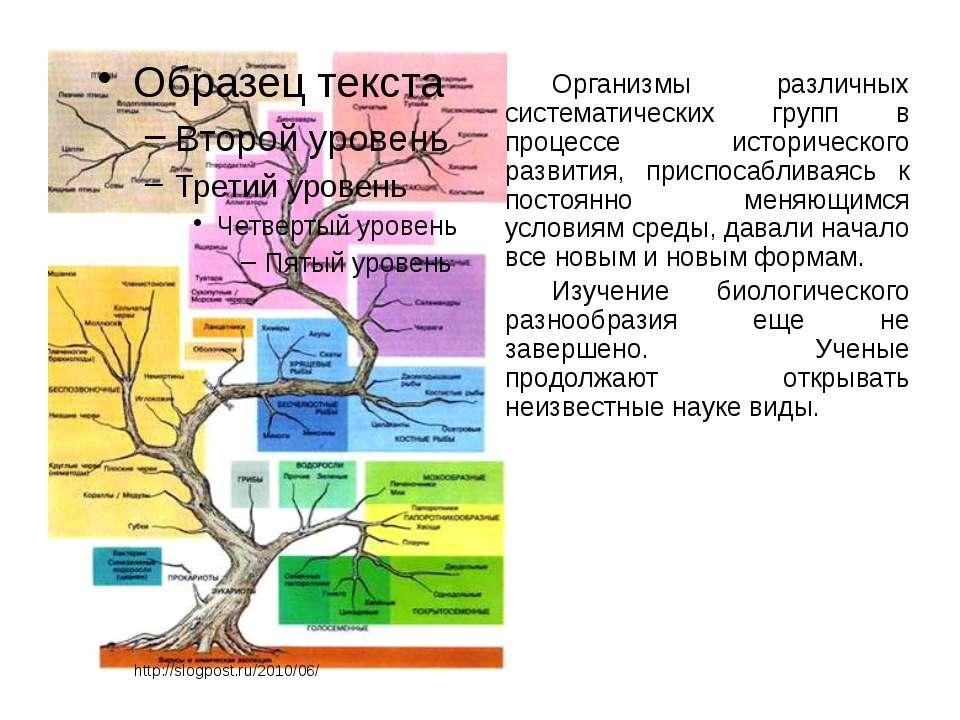 Организмы различных систематических групп в процессе исторического развития, ...