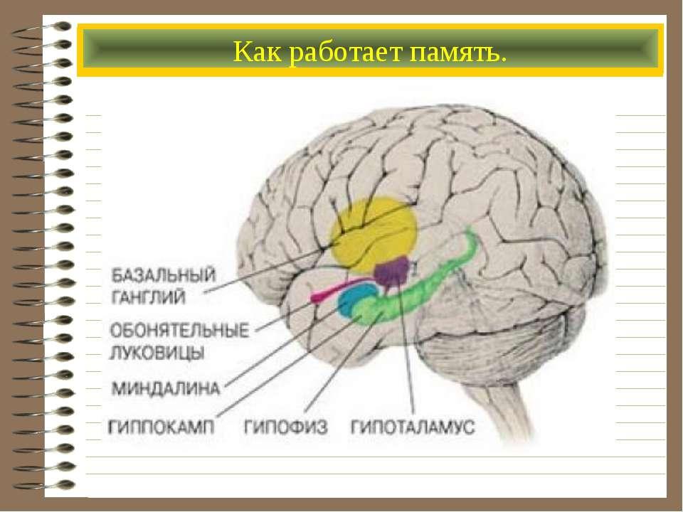 Основной инструмент познания мира Процесс мышления Как работает память.