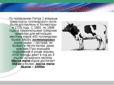 Холмогорская порода По приказанию Петра 1 впервые транспорты голландского ско...