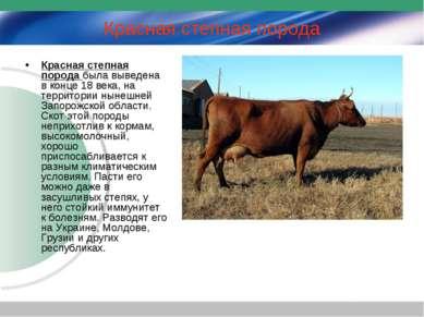 Красная степная порода Красная степная порода была выведена в конце 18 века, ...