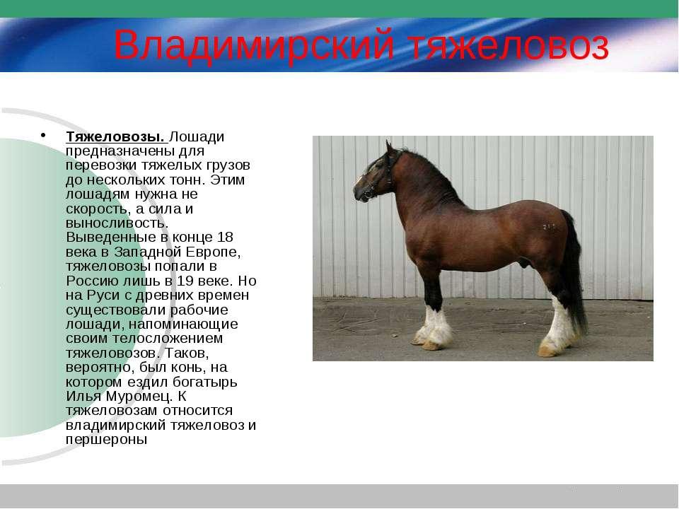 Владимирский тяжеловоз Тяжеловозы. Лошади предназначены для перевозки тяжелых...
