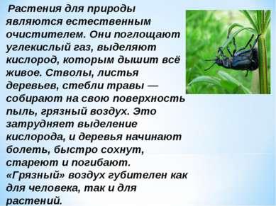 Растения для природы являются естественным очистителем. Они поглощают углекис...
