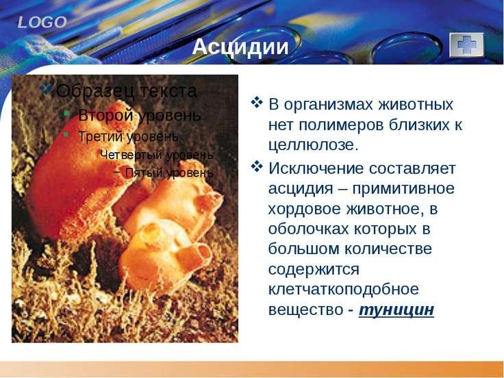 Асцидии В организмах животных нет полимеров близких к целлюлозе. Исключение с...