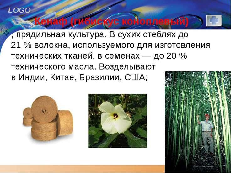 Кенаф (гибискус коноплевый) , прядильная культура. В сухих стеблях до 21% во...