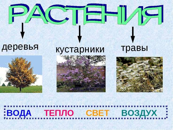 деревья кустарники травы ВОДА ТЕПЛО СВЕТ ВОЗДУХ