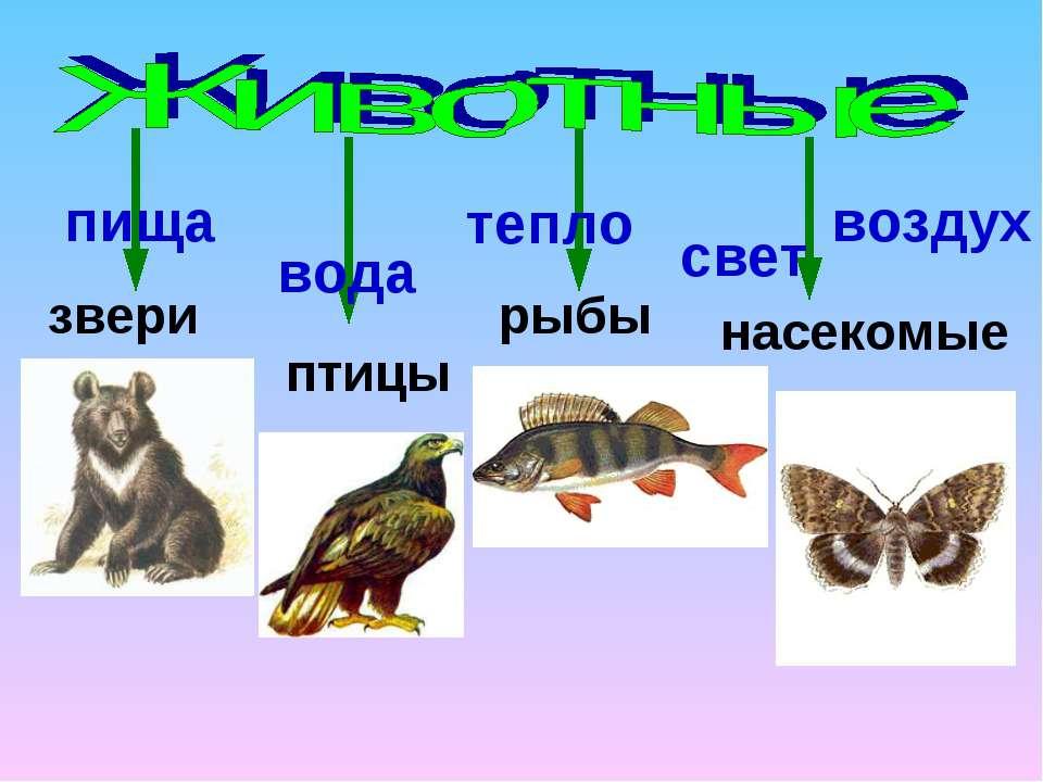 звери птицы рыбы насекомые пища вода тепло воздух свет