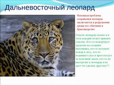Дальневосточный леопард Основная проблема сохранения леопарда заключается в р...