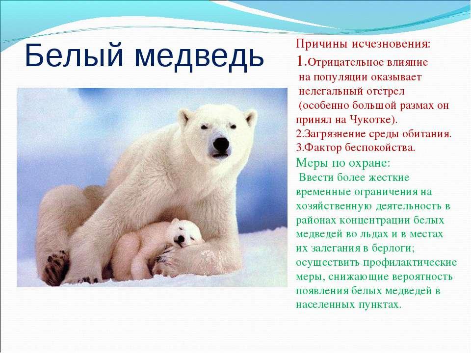 Белый медведь Причины исчезновения: 1.Отрицательное влияние на популяции оказ...
