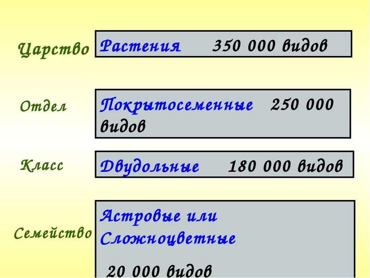 Царство Отдел Класс Семейство Растения 350 000 видов Покрытосеменные 250 000 ...