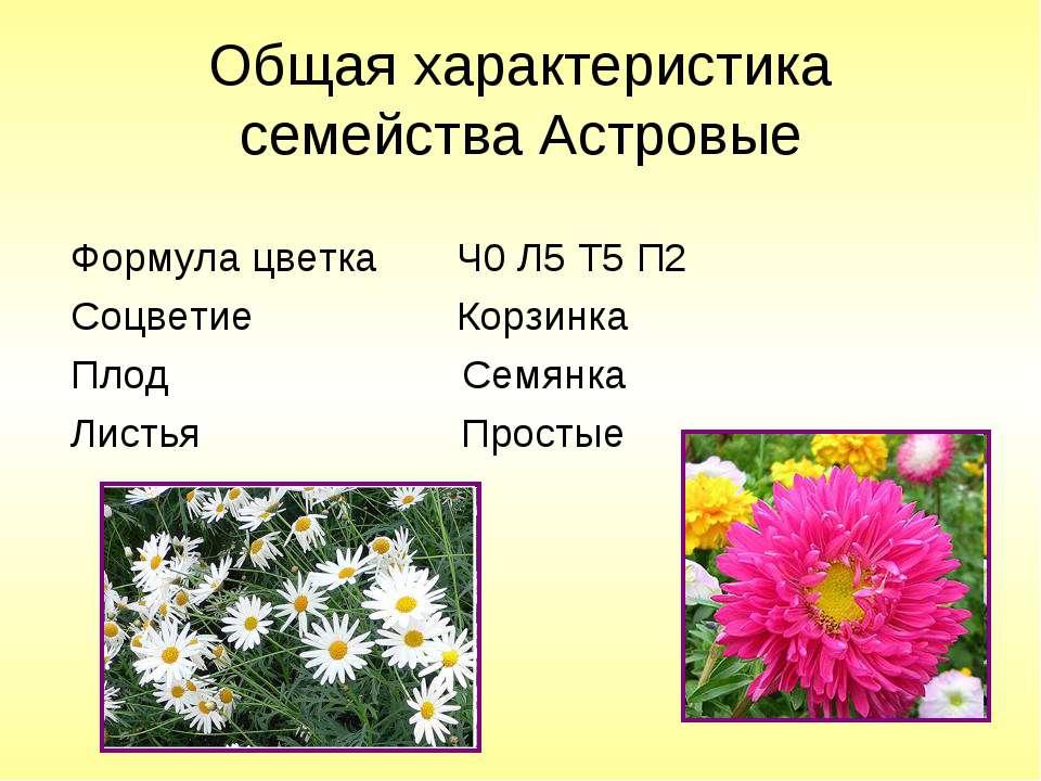 Общая характеристика семейства Астровые Формула цветка Ч0 Л5 Т5 П2 Соцветие К...