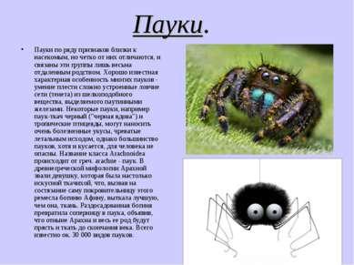 Пауки. Пауки по ряду признаков близки к насекомым, но четко от них отличаются...