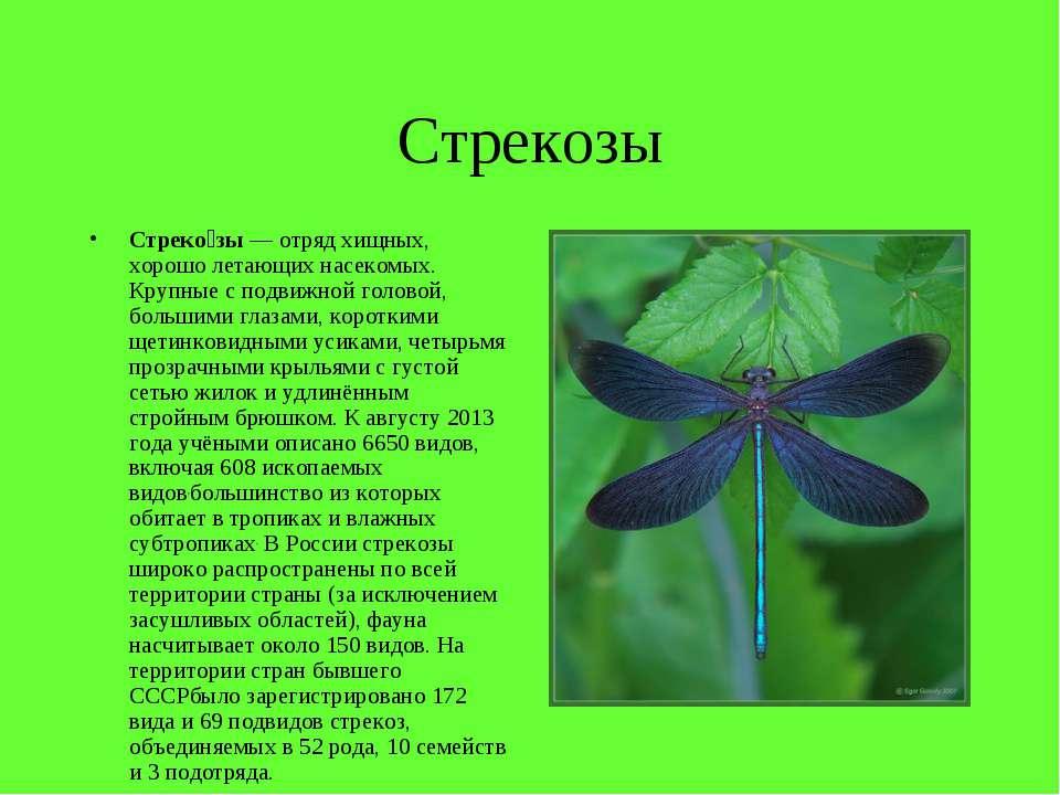 Стрекозы Стреко зы— отряд хищных, хорошо летающих насекомых. Крупные с подви...