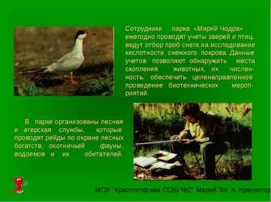 Сотрудники парка «Марий Чодра» ежегодно проводят учеты зверей и птиц, ведут о...