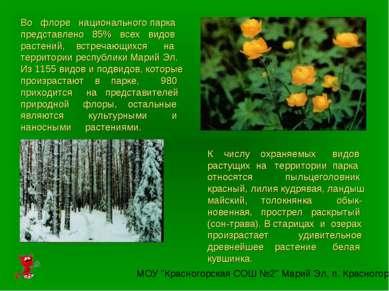 Во флоре национального парка представлено 85% всех видов растений, встречающи...