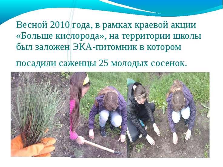 Весной 2010 года, в рамках краевой акции «Больше кислорода», на территории шк...