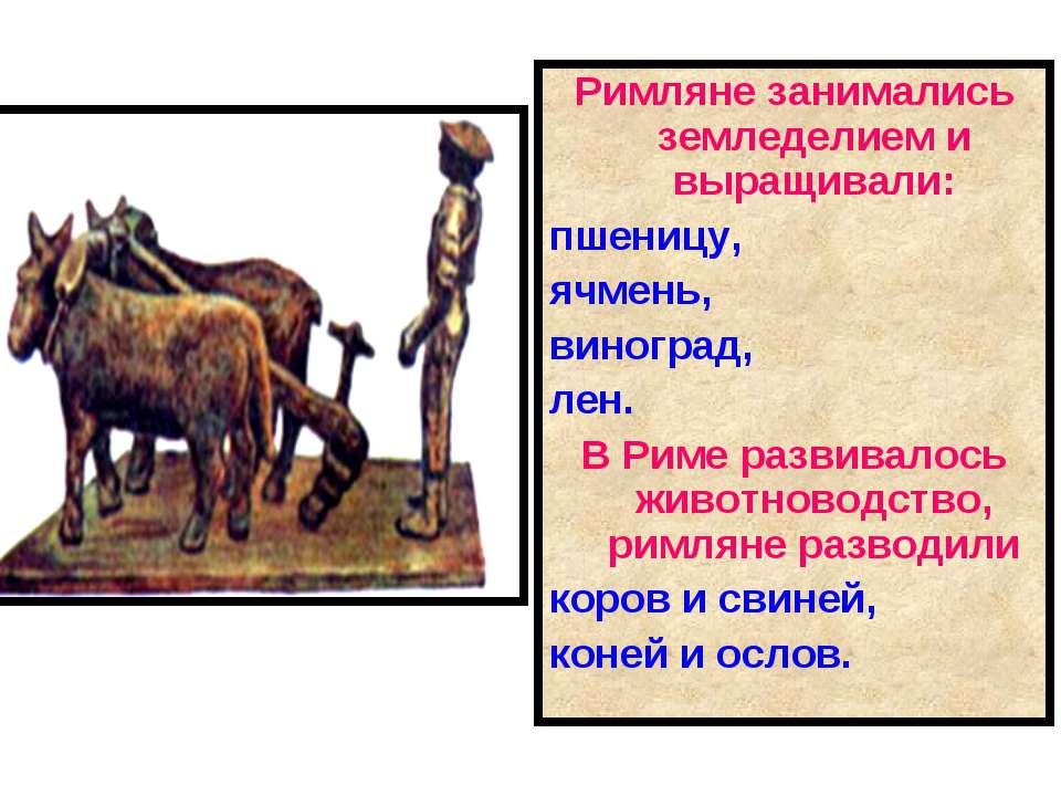 Римляне занимались земледелием и выращивали: пшеницу, ячмень, виноград, лен. ...