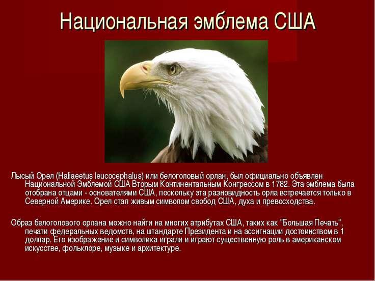 Национальная эмблема США Лысый Орел (Haliaeetus leucocephalus) или белоголовы...