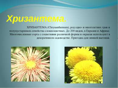 Хризантема. ХРИЗАНТЕМА (Chrysanthemum), род одно- и многолетних трав и полуку...