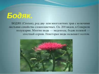 Бодяк. БОДЯК (Cirsium), род дву- или многолетних трав с колючими листьями сем...