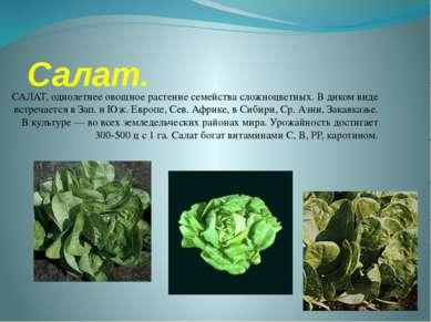 Салат. САЛАТ, однолетнее овощное растение семейства сложноцветных. В диком ви...