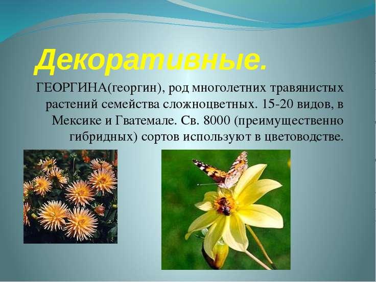 Декоративные. ГЕОРГИНА(георгин), род многолетних травянистых растений семейст...