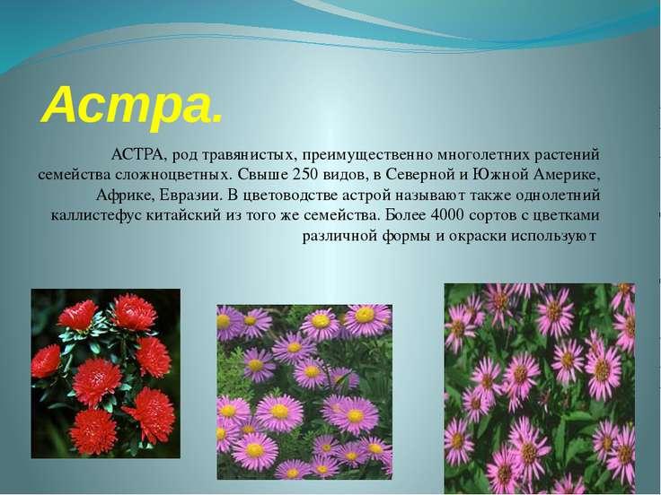 Астра. АСТРА, род травянистых, преимущественно многолетних растений семейства...