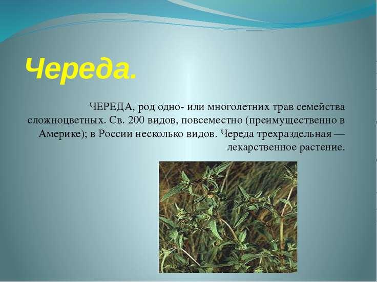 Череда. ЧЕРЕДА, род одно- или многолетних трав семейства сложноцветных. Св. 2...