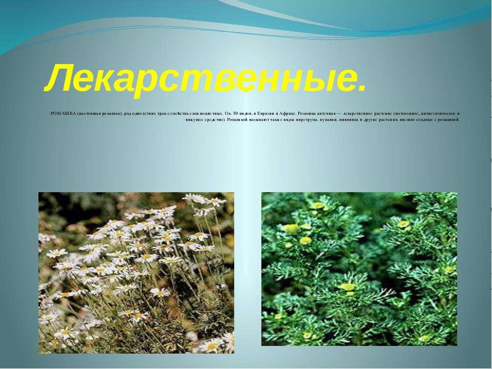 Лекарственные. РОМАШКА (настоящая ромашка), род однолетних трав семейства сло...