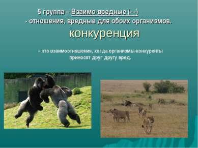 5 группа – Взаимо-вредные (- -) - отношения, вредные для обоих организмов. ко...