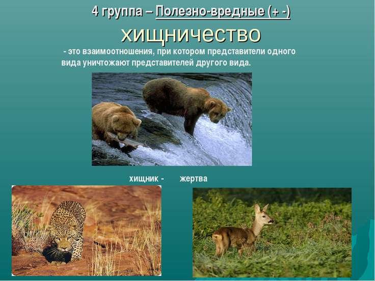 4 группа – Полезно-вредные (+ -) хищничество - это взаимоотношения, при котор...