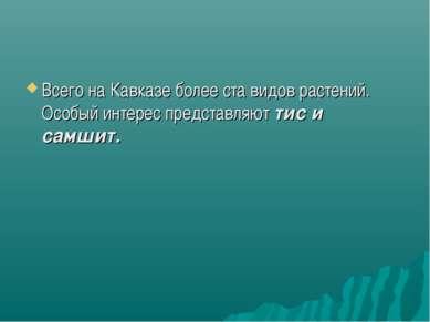 Всего на Кавказе более ста видов растений. Особый интерес представляют тис и ...