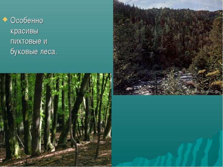 Особенно красивы пихтовые и буковые леса.
